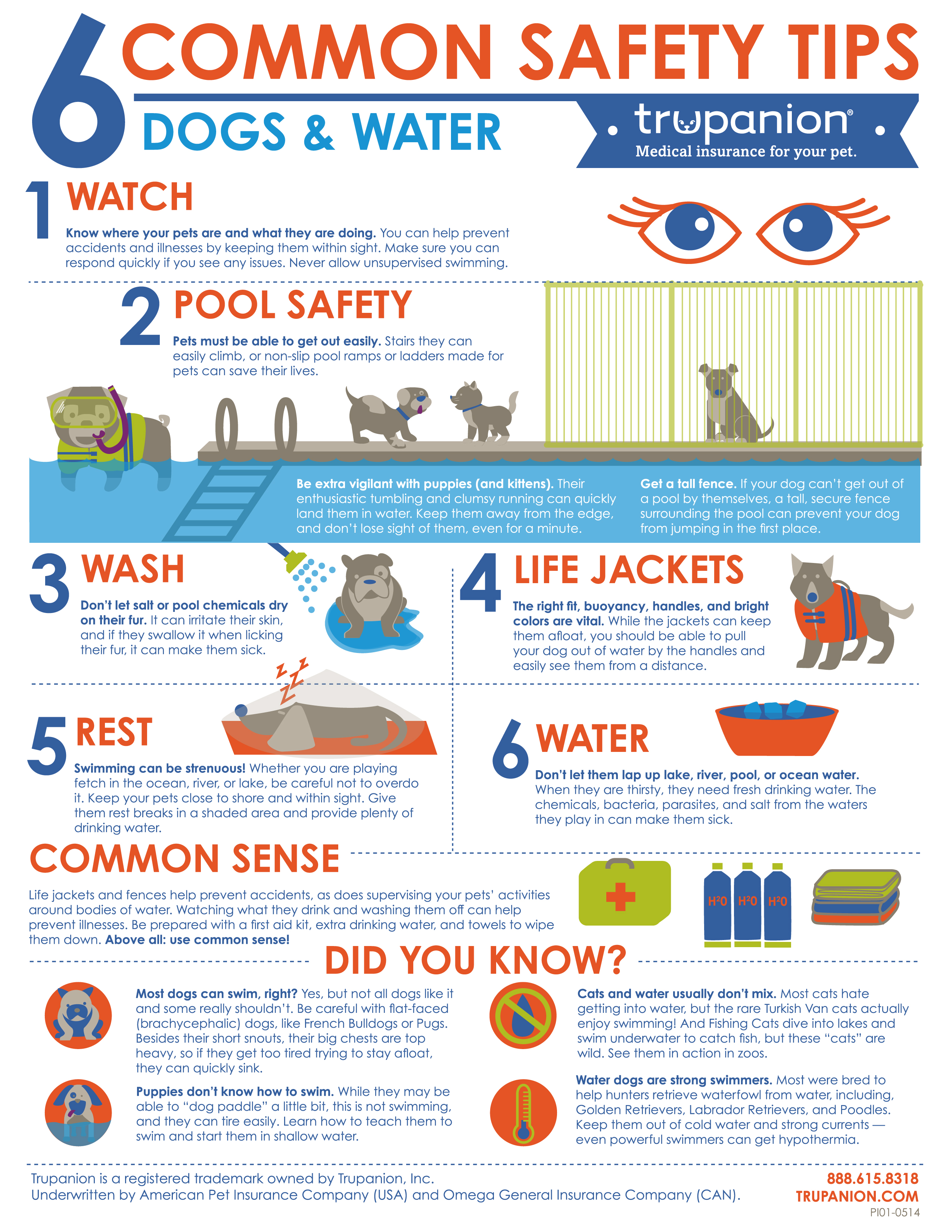 six common safety tips dogs and water infographic   water